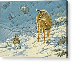 Mule Deer Acrylic Prints