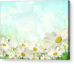 Colorful Flowers Acrylic Prints