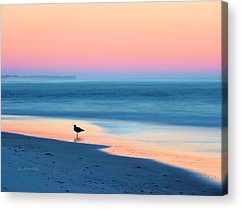 Coastal Birds Acrylic Prints