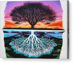 Tree Roots Drawings Acrylic Prints
