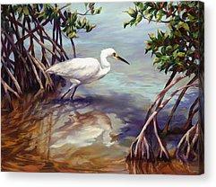 White Ibis Acrylic Prints