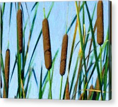 Bullrushes Acrylic Prints