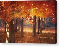 Autumn Leaves Acrylic Prints