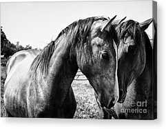 Country And Western Acrylic Prints