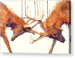 Deer Acrylic Prints