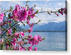 Lake Geneva Acrylic Prints