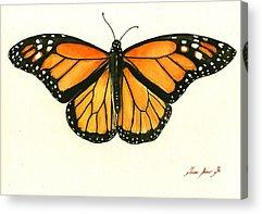 Monarch Butterfly Acrylic Prints