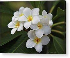Hawaii Acrylic Prints