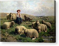 Sheep Dog Acrylic Prints