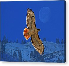 Red Tailed Hawk Acrylic Prints