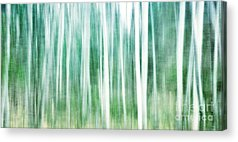 Winter Forest Acrylic Prints