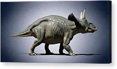 Diceratops Photographs Acrylic Prints