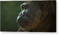 Gorilla Digital Art Acrylic Prints