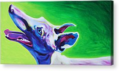 Retired Racer Dog Portrait Acrylic Prints