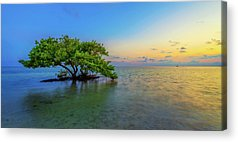 Mangrove Acrylic Prints