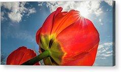 Sunburst Floral Still Life Acrylic Prints