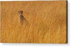 Camouflage Acrylic Prints