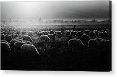 Sheep Farm Acrylic Prints