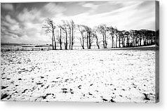 Trees In Snow Acrylic Prints