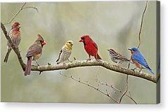 Finch Acrylic Prints