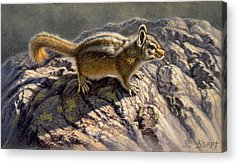 Chipmunks Acrylic Prints