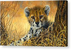 Cheetah Acrylic Prints