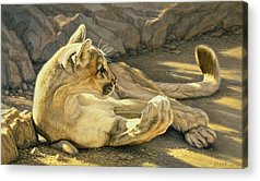 Puma Acrylic Prints