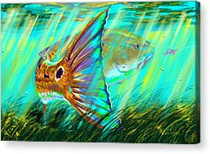Shrimp Acrylic Prints