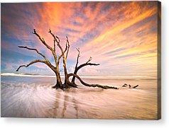 Driftwood Beach Acrylic Prints
