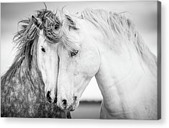 Black And White Horse Acrylic Prints