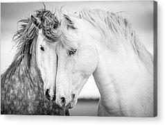 Equine Acrylic Prints
