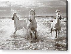 Grey Horse Acrylic Prints
