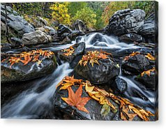 Oak Creek Photographs Acrylic Prints