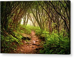 Forests Acrylic Prints