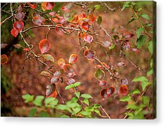 Out Of Focus Acrylic Prints