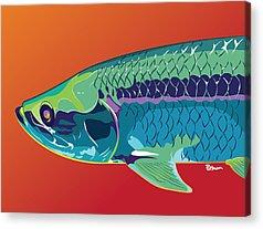 Colorful Fish Acrylic Prints