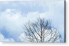 Winter Sky Acrylic Prints