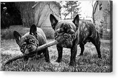 Hund Acrylic Prints