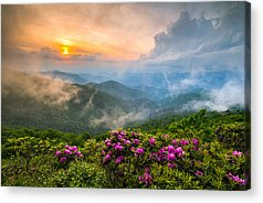 Rhododendron Acrylic Prints