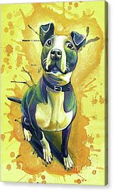 French Bull Dog Acrylic Prints