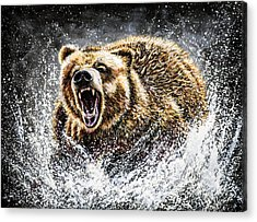 Grizzly Bear Acrylic Prints