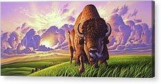 Buffalo Acrylic Prints