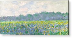 Field Of Flowers Acrylic Prints