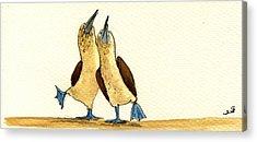 Galapagos Wildlife Acrylic Prints