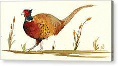 Pheasant Acrylic Prints