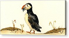 Puffin Acrylic Prints
