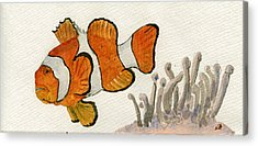 Clownfish Acrylic Prints