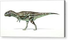 Abelisauridae Acrylic Prints