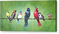 Cedar Waxing Acrylic Prints