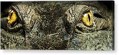 Crocodile Acrylic Prints
